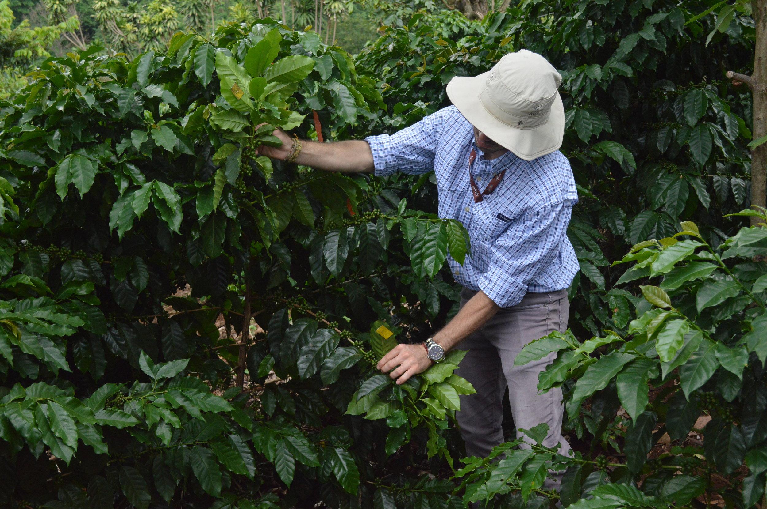 Featured project: NAMA Café Costa Rica -