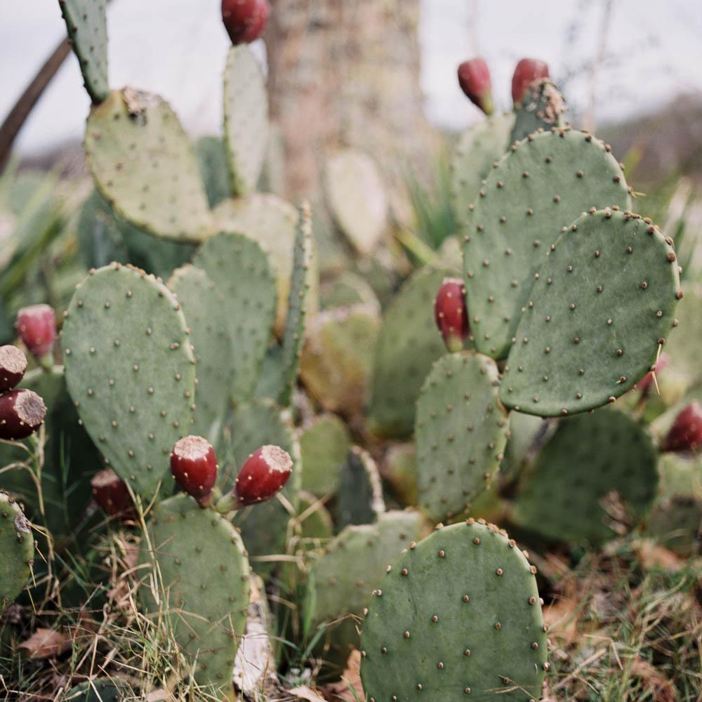cactus creek nashville natural outdoor wedding venue ©2015abigailbobophotography-3.jpg