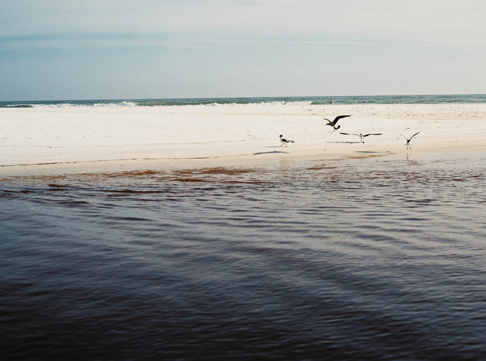 WEB our 30a bonfire grayton beach editorial photographer film natural documentary ©2016abigailbobophotography-8.jpg