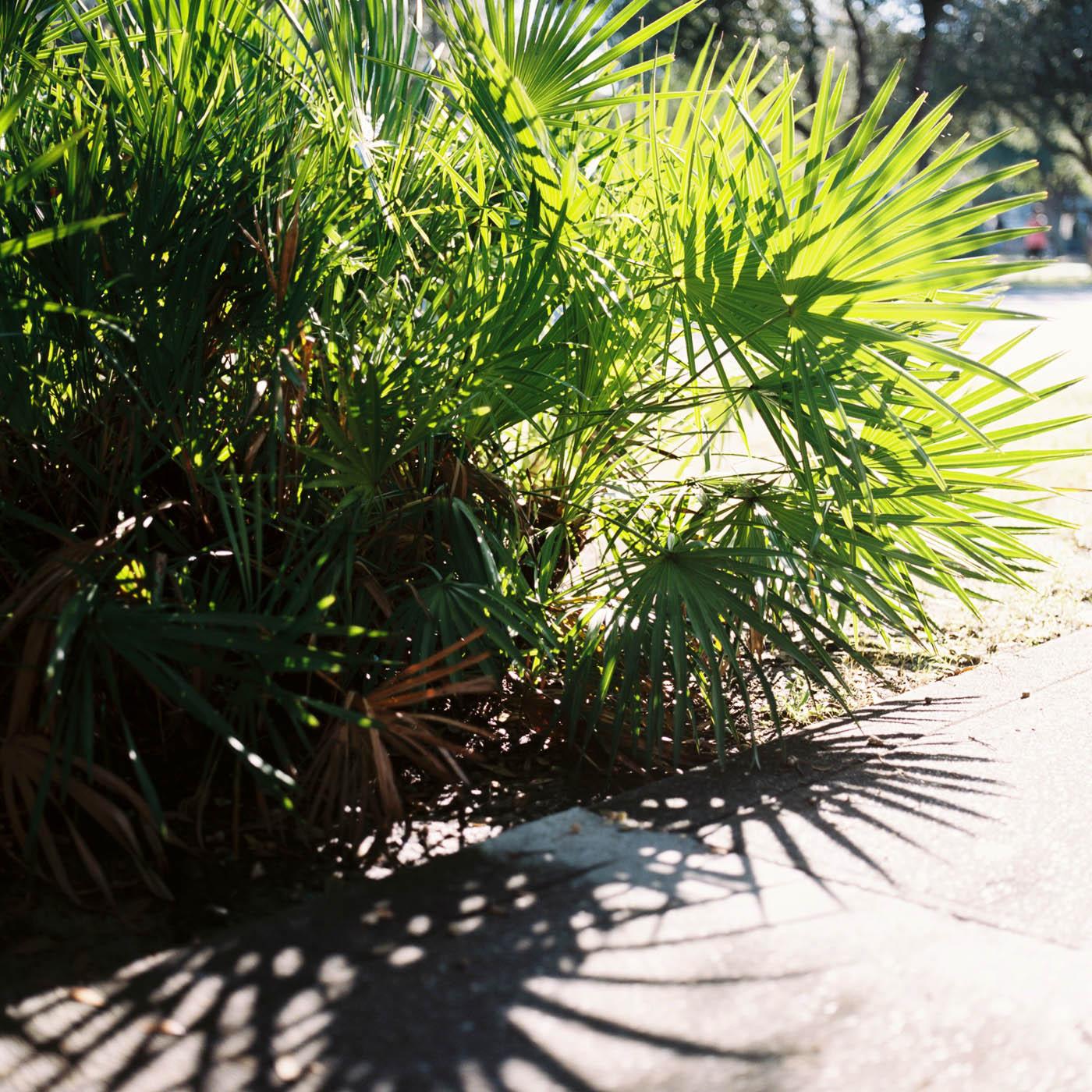 film lifestyle 30A beach photographer ©2015abigailbobophotography-1.jpg