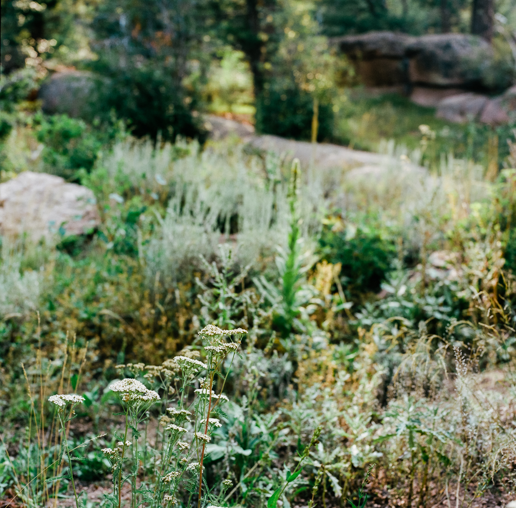 wyoming nature photographers film hasselblad shots ©2018abigailbobophotography-6.jpg