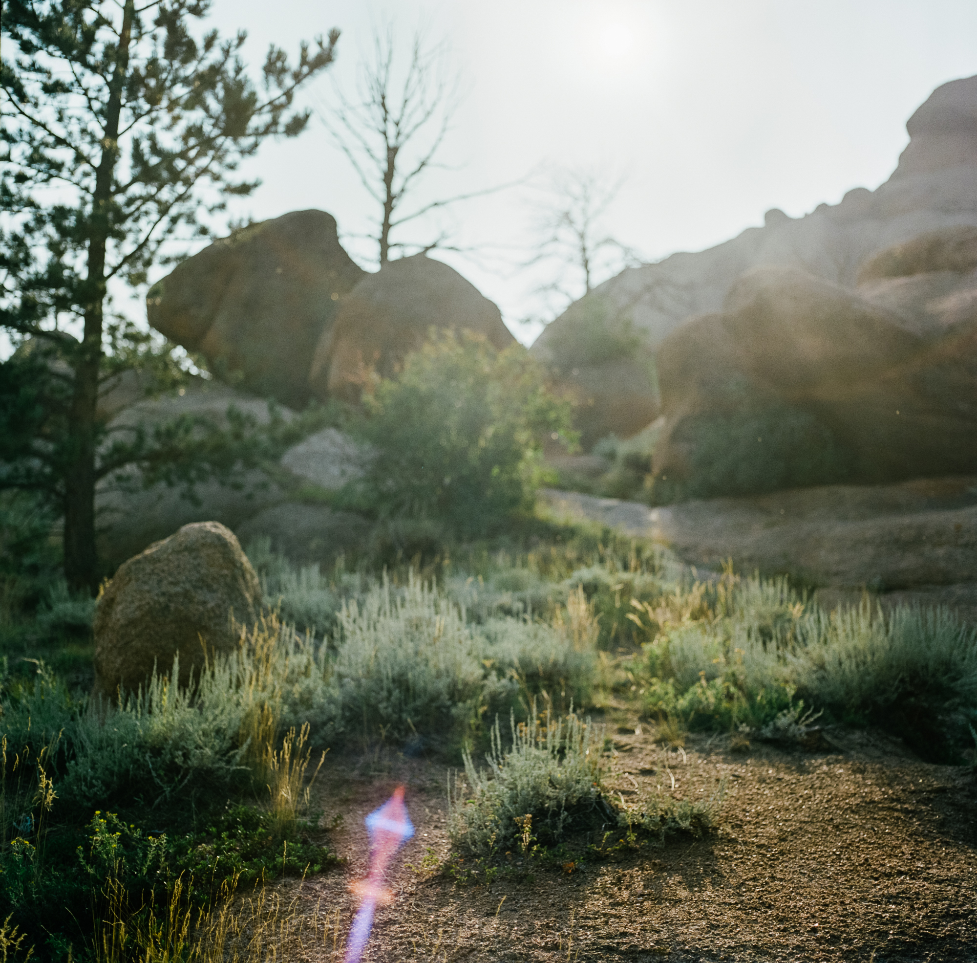 wyoming nature photographers film hasselblad shots ©2018abigailbobophotography-8.jpg