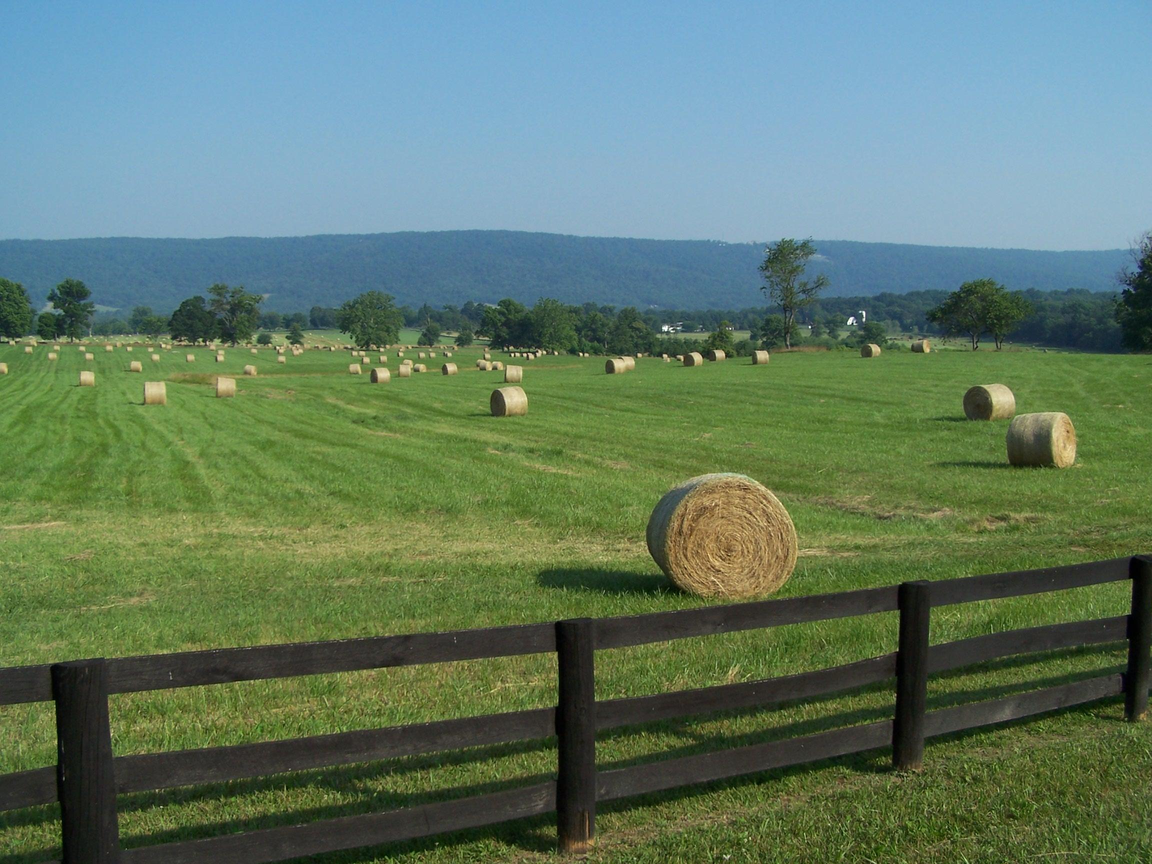 Springtime hay near Blakeley's Grove, Fauquier County.