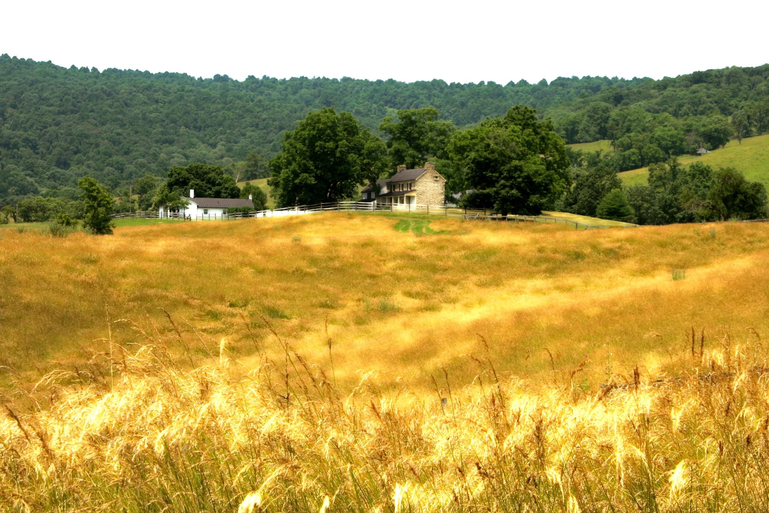 A windy summer day looking toward Mount Bleak, Fauquier County.