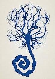 placenta.jpg