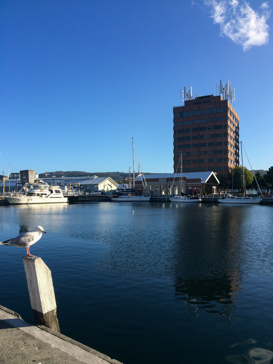 The view whilst waiting for top-class fish n chips in the harbour.