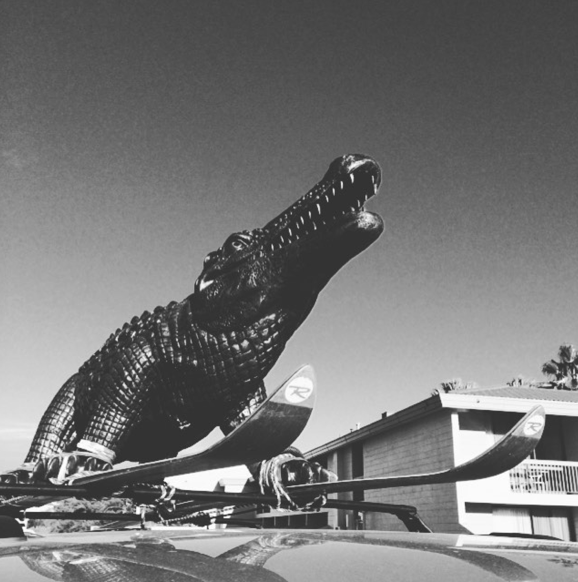 This croc surely has made us the most photographed vehicle on the Stuart Highway in 2016