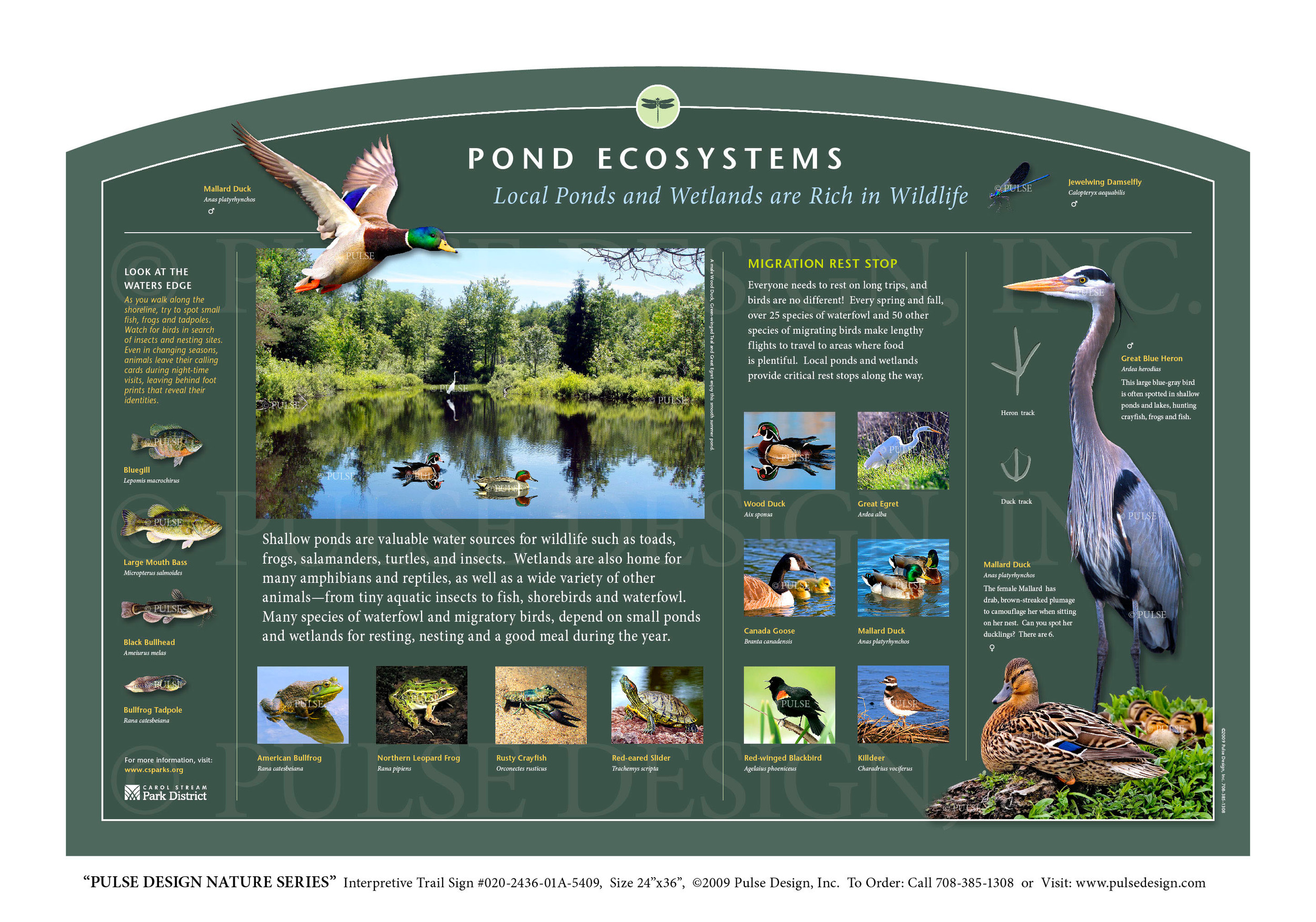 Interpretive Nature Trail Sign, Water and Wetland Habitat, Pond Ecosystems