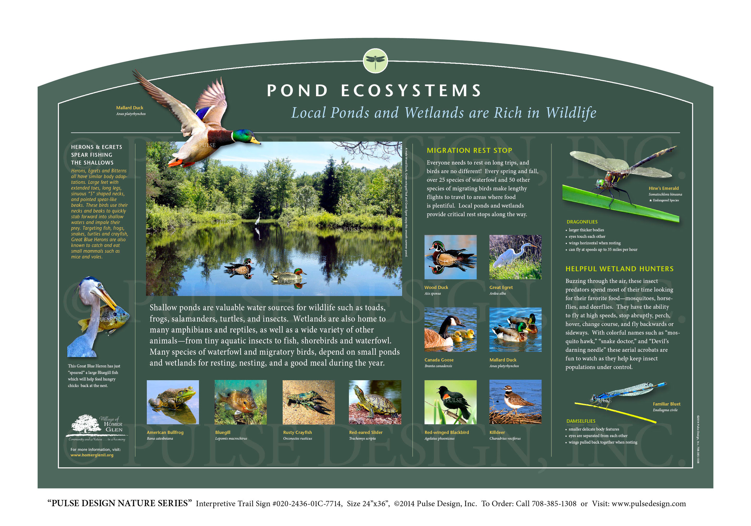 "Pulse Design provides Outdoor Interpretive Nature Trail Signs, Environmental Education Exhibits, Graphic Display Panels, Wayfinding Signage and Monuments, focused on Wildlife and Habitat throughout the United States. The  PULSE DESIGN NATURE SERIES  is a beautiful, ""Ready-to-Order"" and ""Customizable"" series of interpretive trail signs that cover many common nature subjects. See more signs from our  WATER & WETLAND HABITAT SERIES ."
