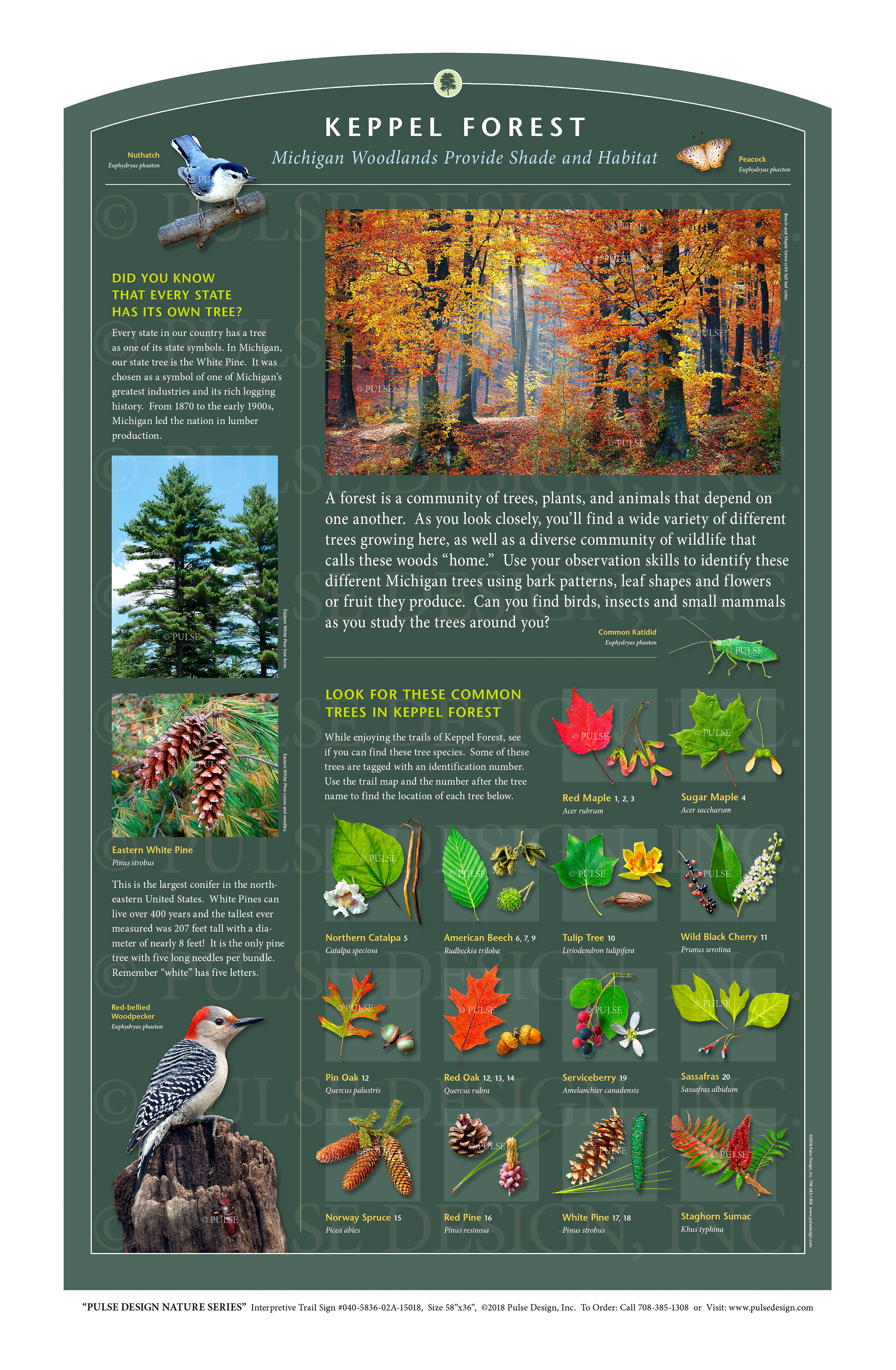"""Pulse Design provides Outdoor Interpretive Nature Trail Signs, Environmental Education Exhibits, Graphic Display Panels,Wayfinding Signage and Monuments, focused on Wildlife and Habitat throughout the United States. The  PULSE DESIGN NATURE SERIES is a beautiful, """"Ready-to-Order"""" and """"Customizable"""" series of interpretive trail signs that cover many common nature subjects. See more signs from our  FOREST & WOODLAND HABITAT SERIES ."""