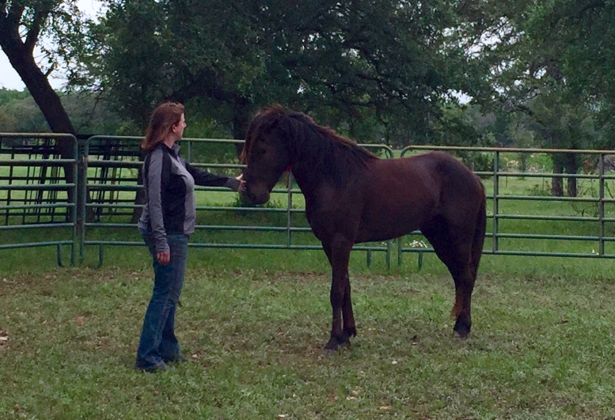 Kris working in the round pen with a recently captured wild mustang in Austin, Texas