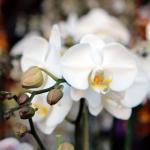 Brookside_Orchids_1754_credit_tory_putnam.jpg