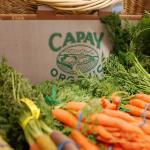 capay_carrots3.jpeg