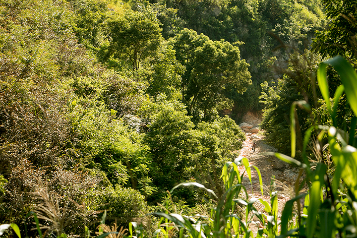 A view of the riverbed that serves as much of the road to the community of Wopisa, which is accessible only on foot: the ascents and descents into the ravine are to steep for motos or even animals.