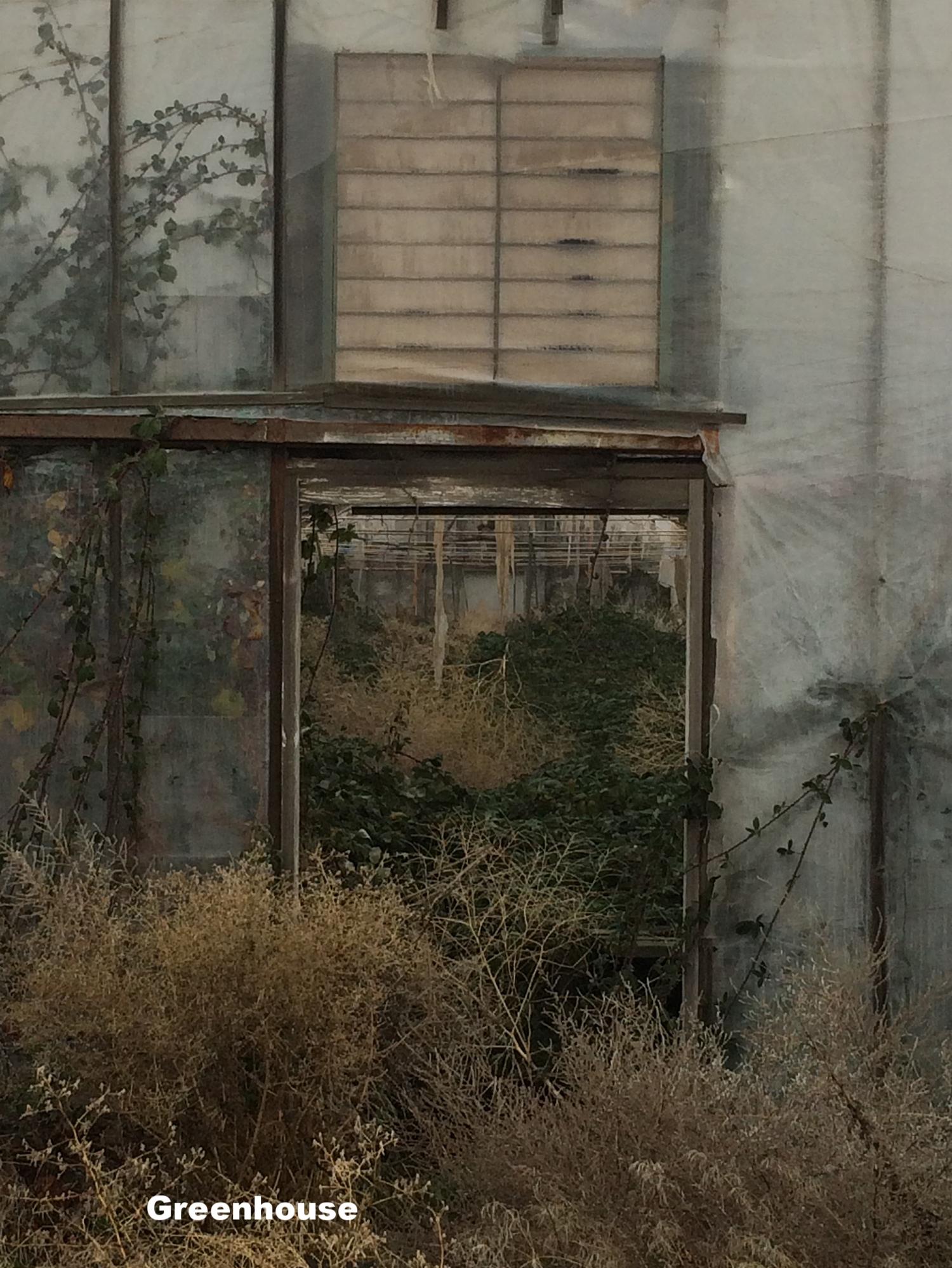 8x10_Greenhouse.jpg