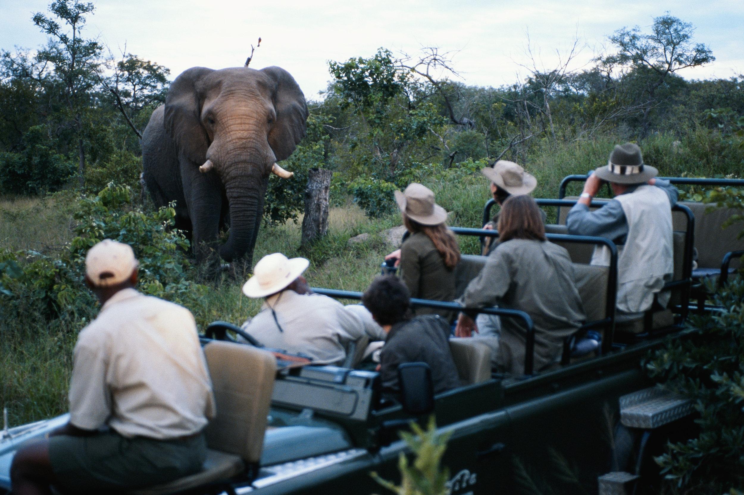safari incentive travel