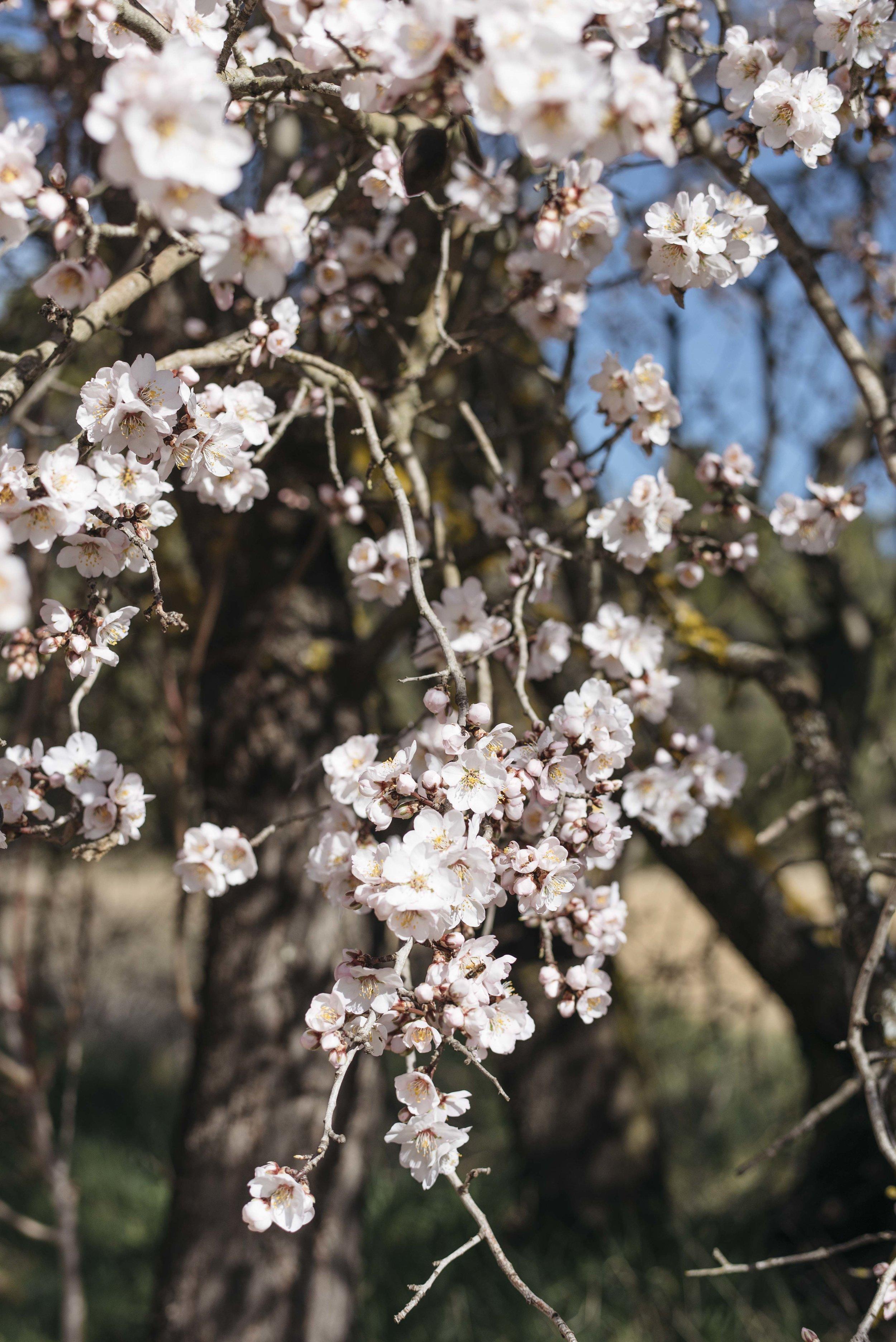 Spring - Olivia Thébaut