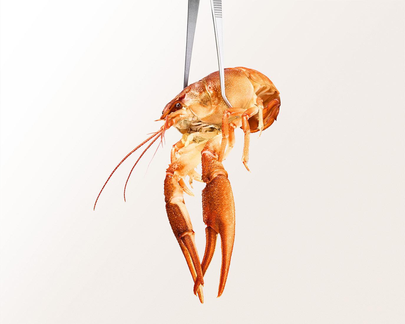 Personal work   Sea food / Norway lobster