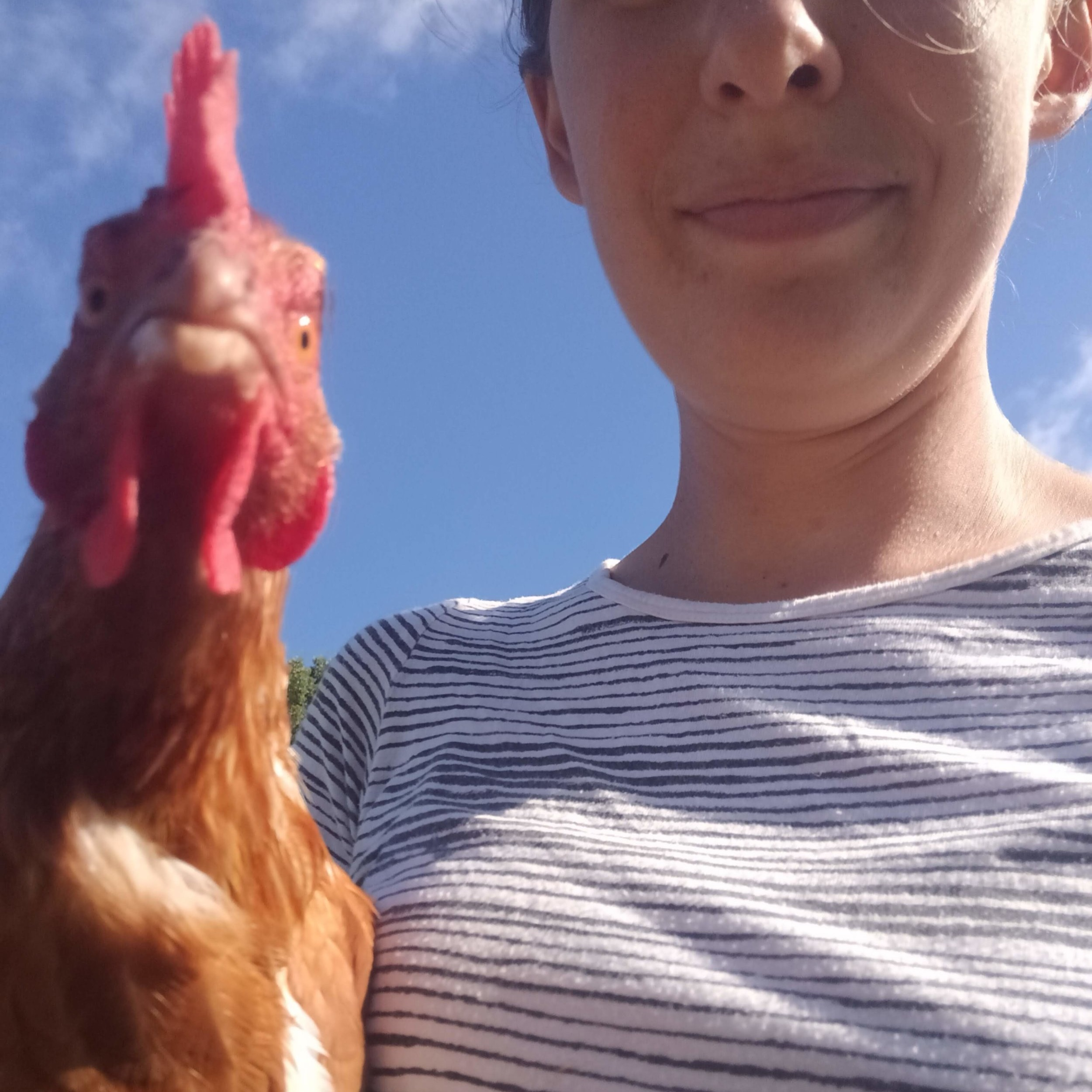 Laying hens are always on board with a selfie. Fun farm fact.