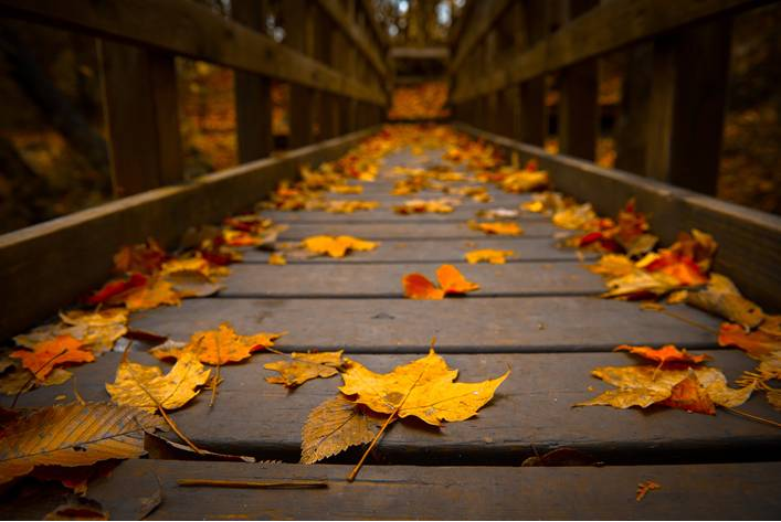 When should I start Planning? - Autumn is the best time of the year to start planning your new home, renovation or extension and here are the reasons why.Read More…