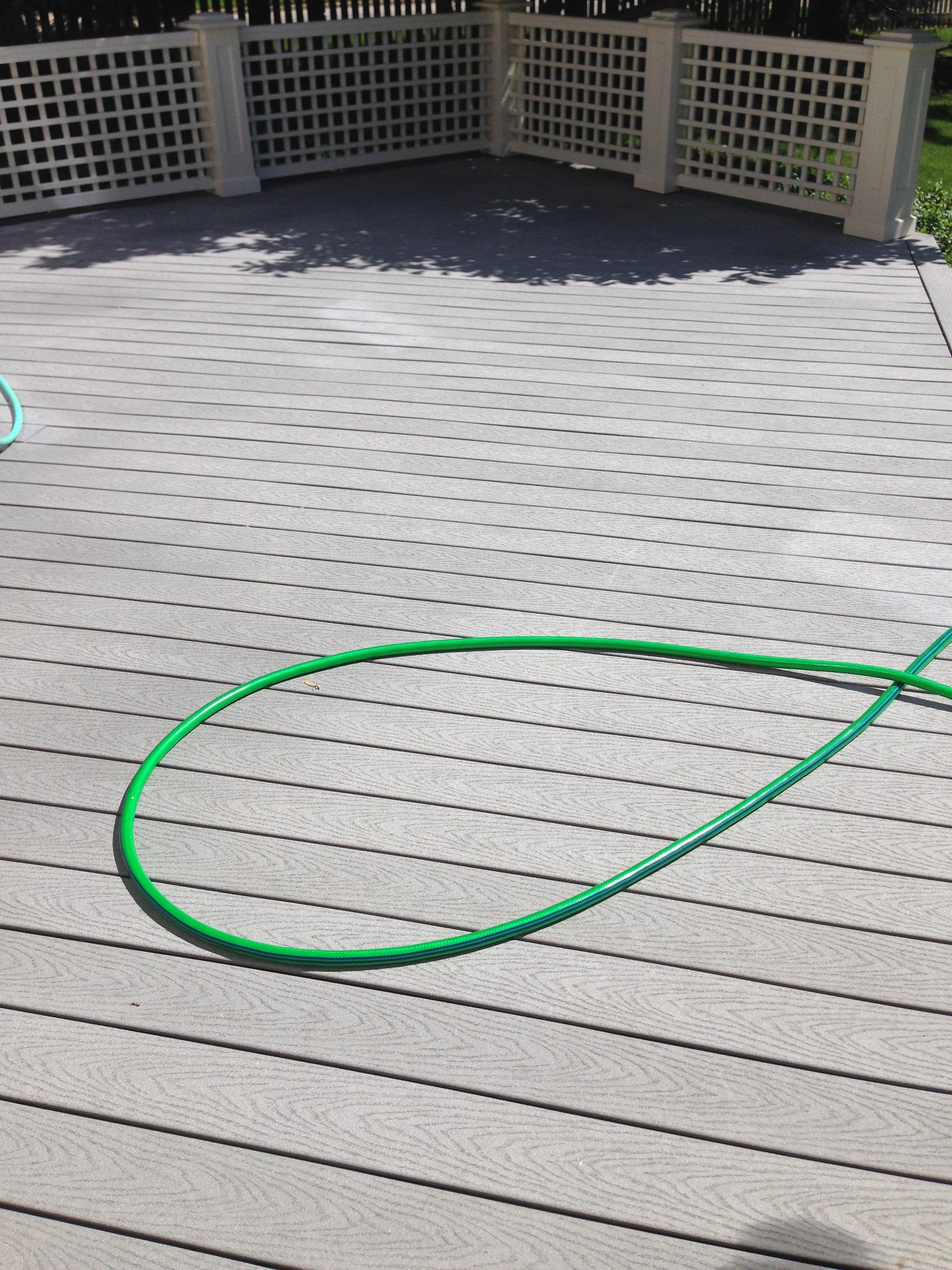 Trex deck and mold