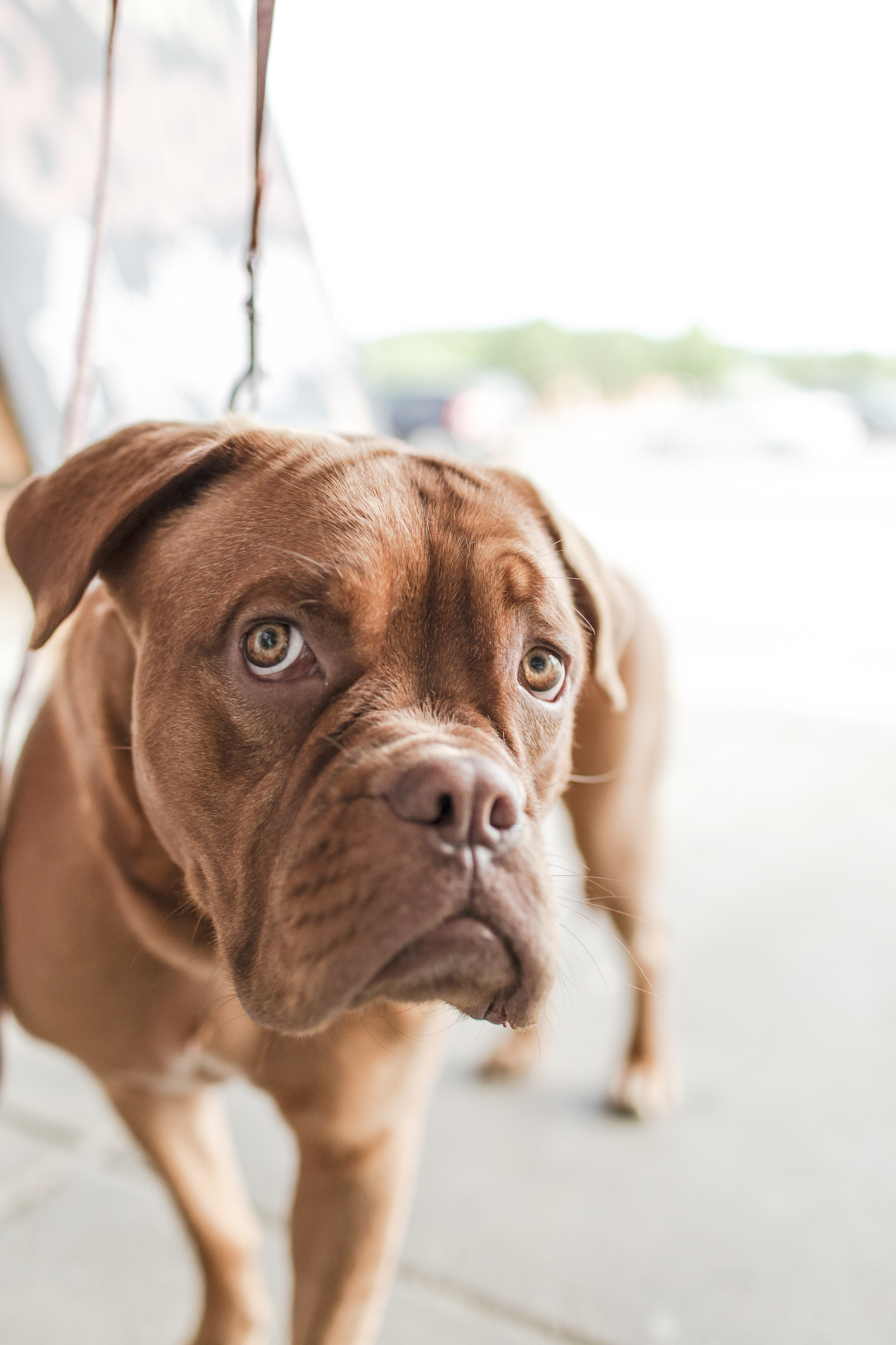 Pet stains and odors