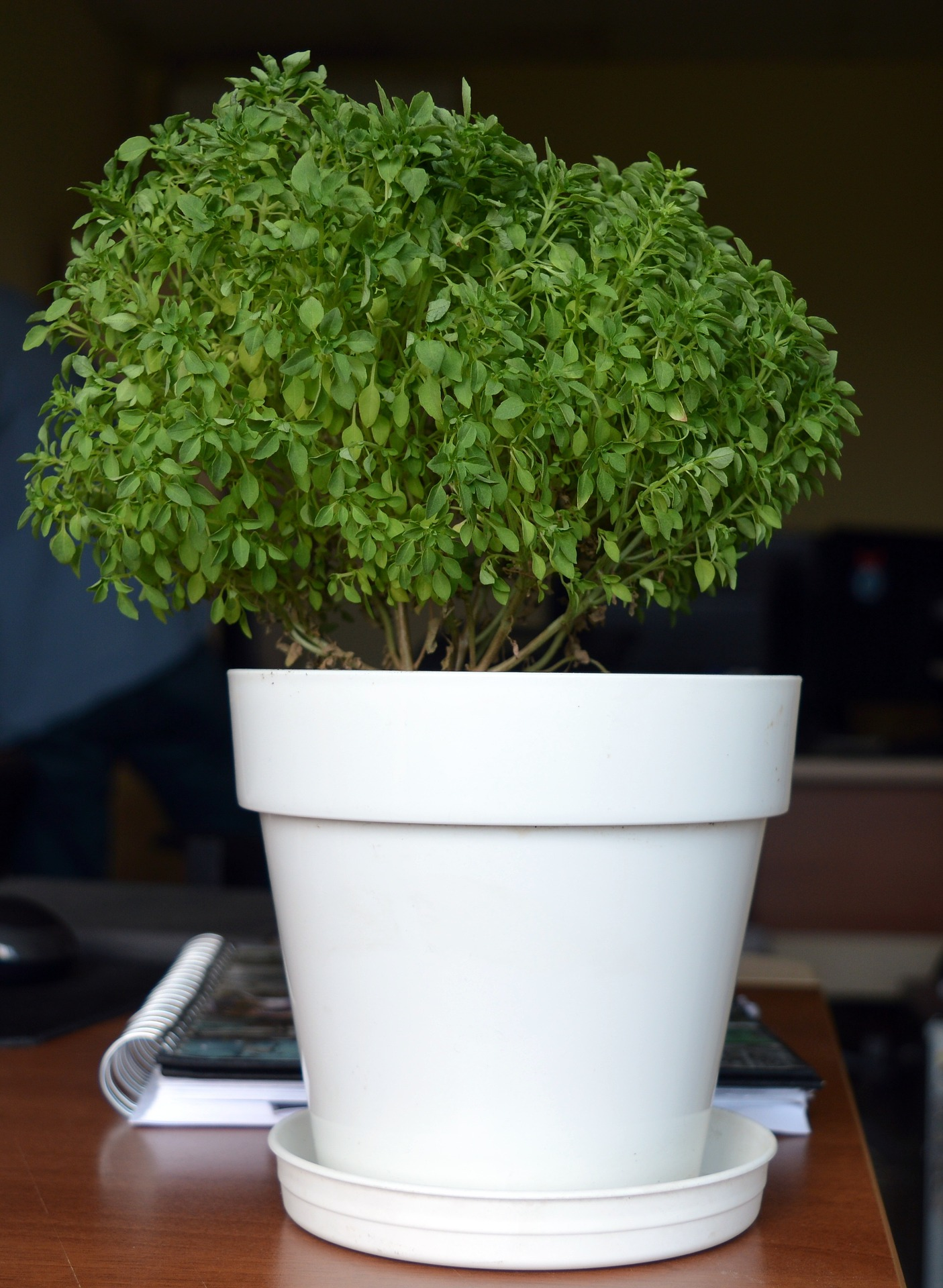 indoor air quality, plants