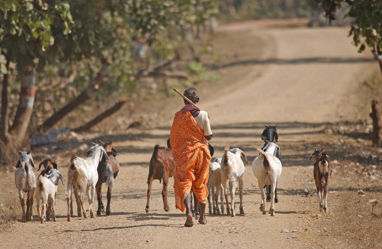 India-114.jpg