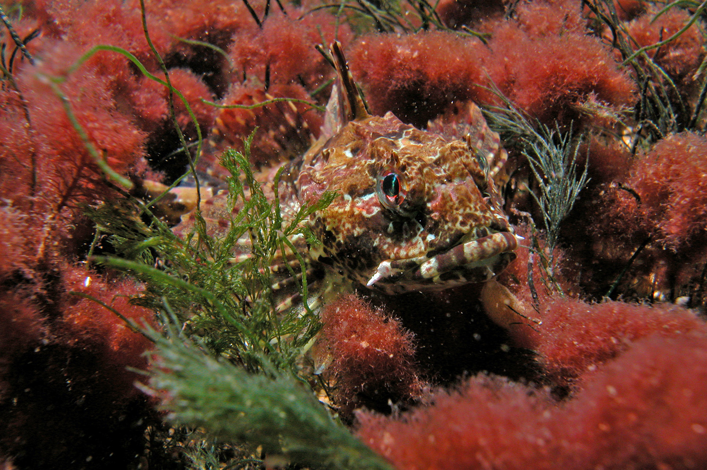 Rathlin-Island-Dive-photos-033.jpg