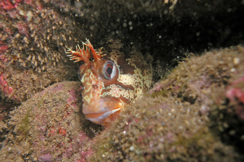 Rathlin-Island-Dive-photos-263.jpg