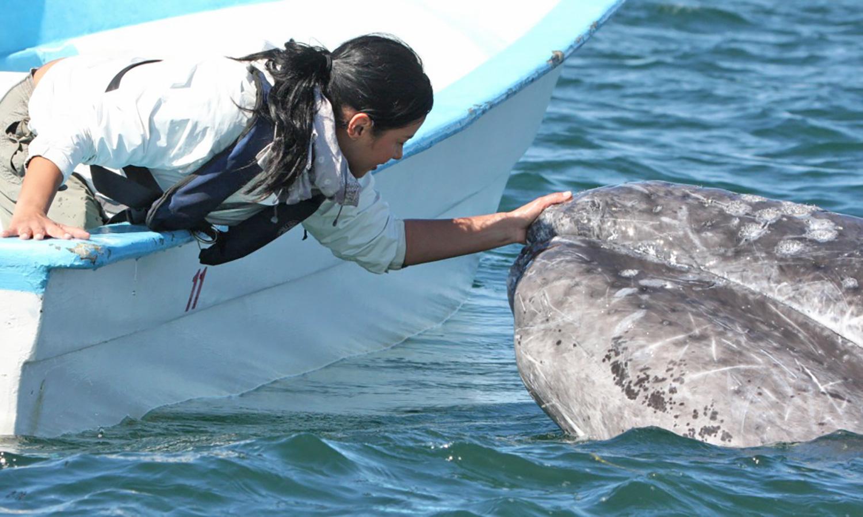 4_whale-(6).jpg