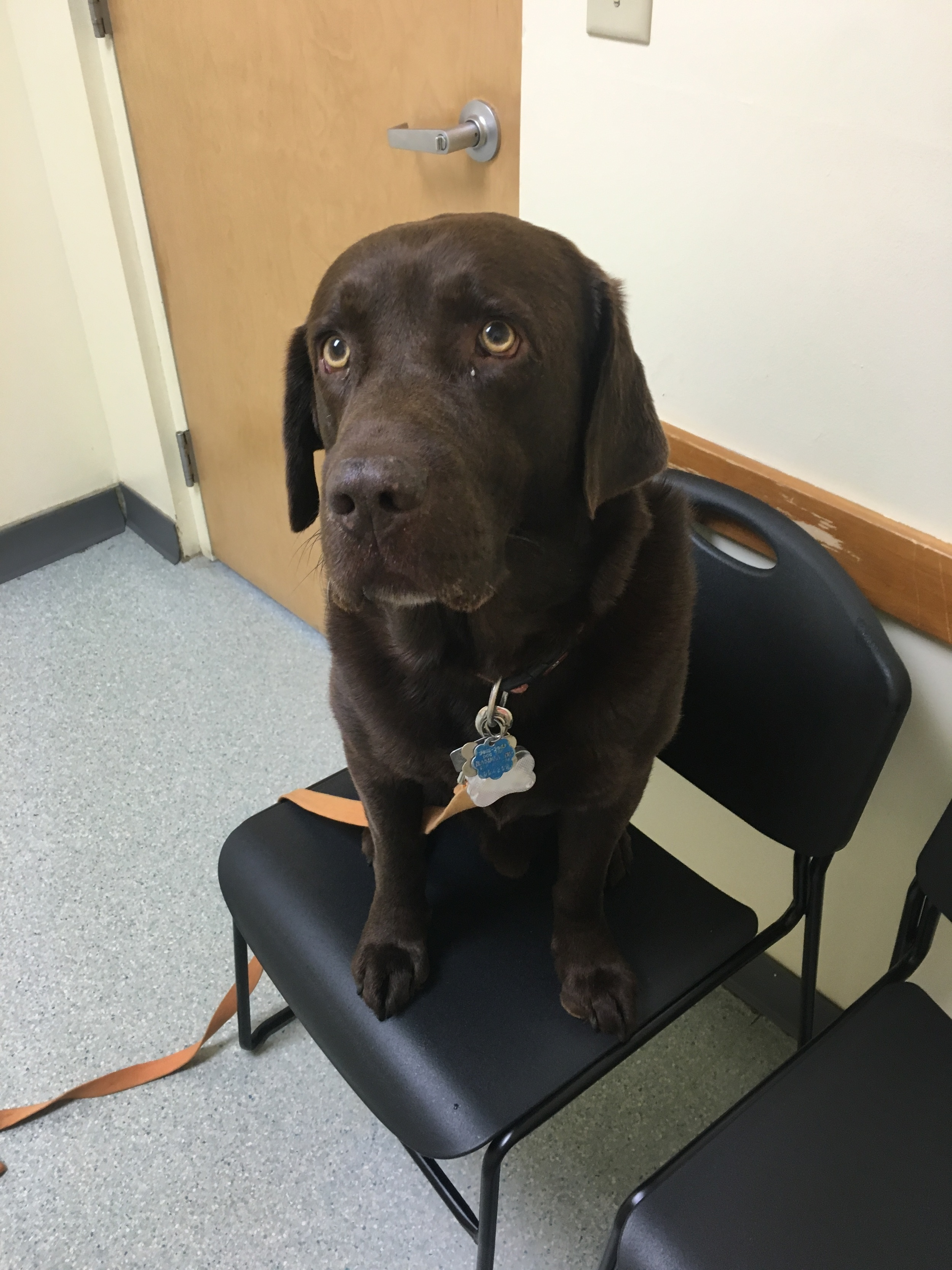 Another vet visit for Coop. Wasn't feeling it this time around.