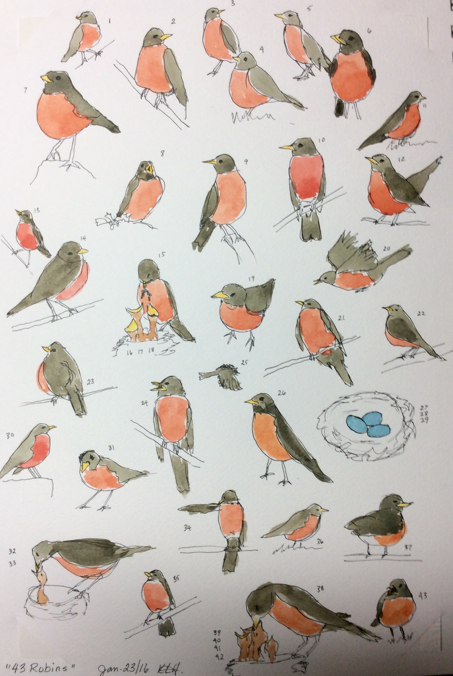 """""""43 Robins""""  Art journal, ink and watercolour, 9 x 12"""""""