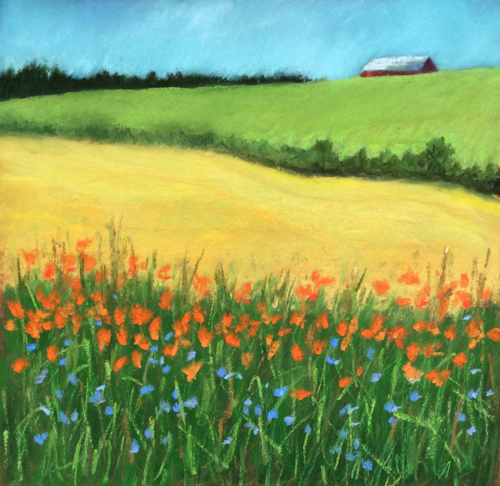 Cornflowers and Daylilies