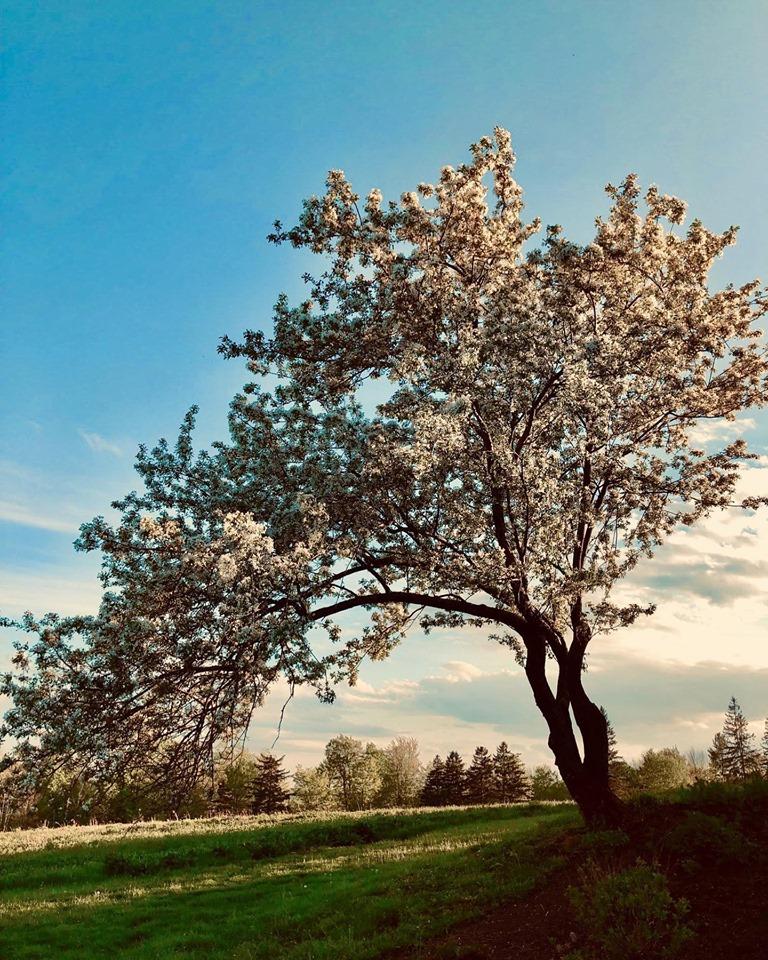 Blooming Tree!.jpg