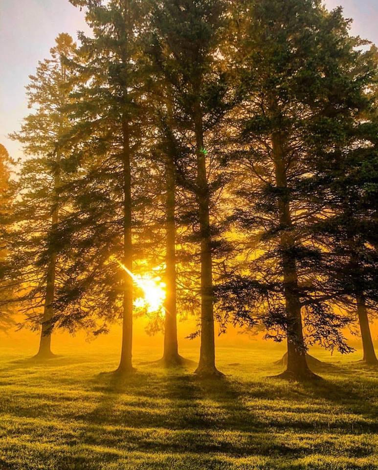 Sunrise in the morning.jpg