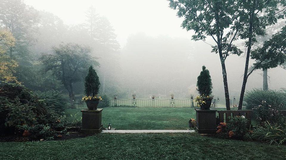 Foggy Gardens.jpg