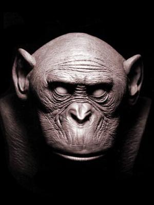 bonobo_2.jpg