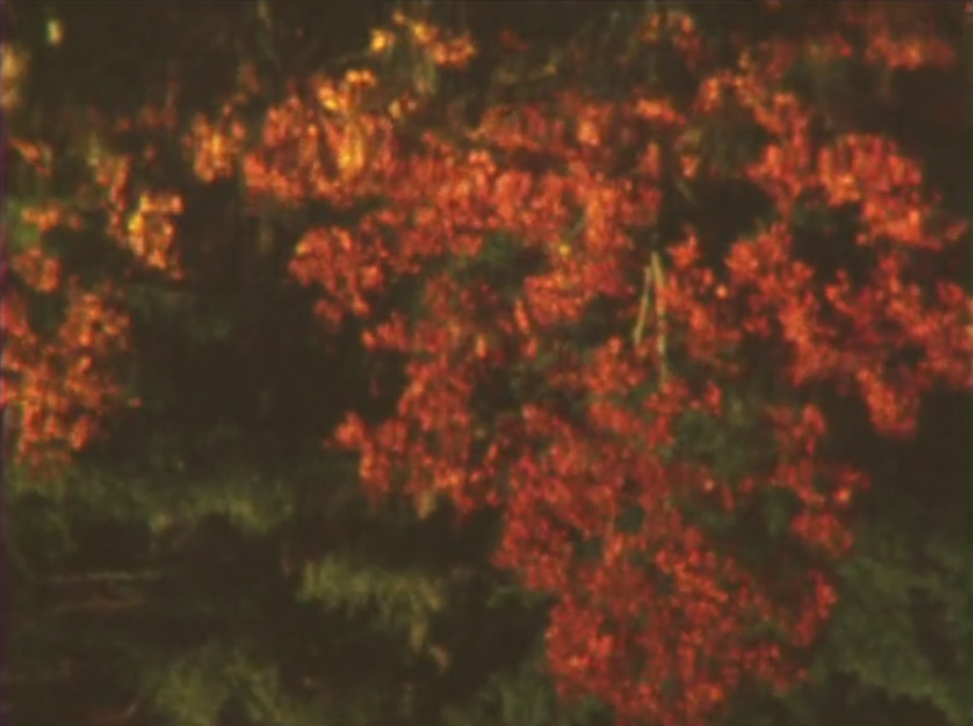 Customary Territory [2015] super 8, 3:25 - Daybreak in a tranquil New England setting. Reflection, refraction and decay.