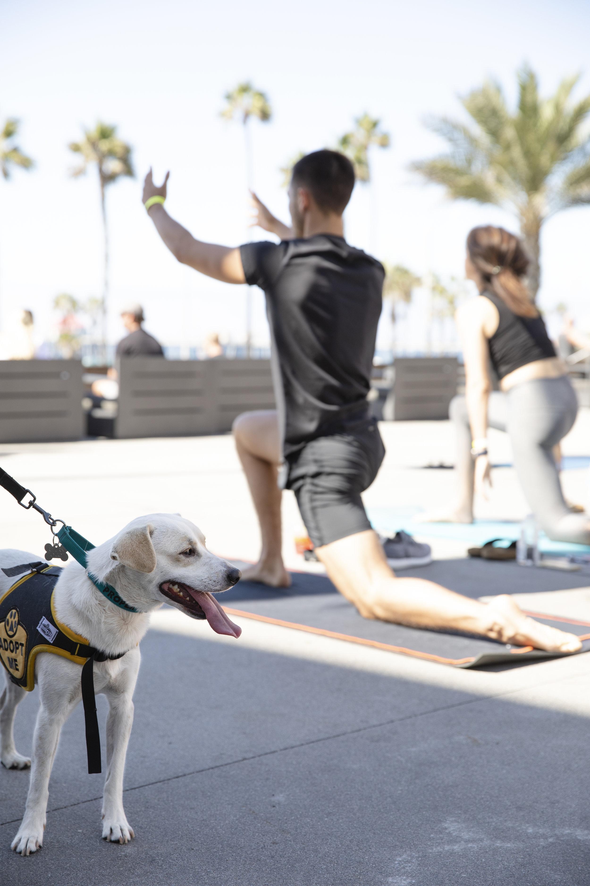 yoga_PacificCity_puppies.jpg