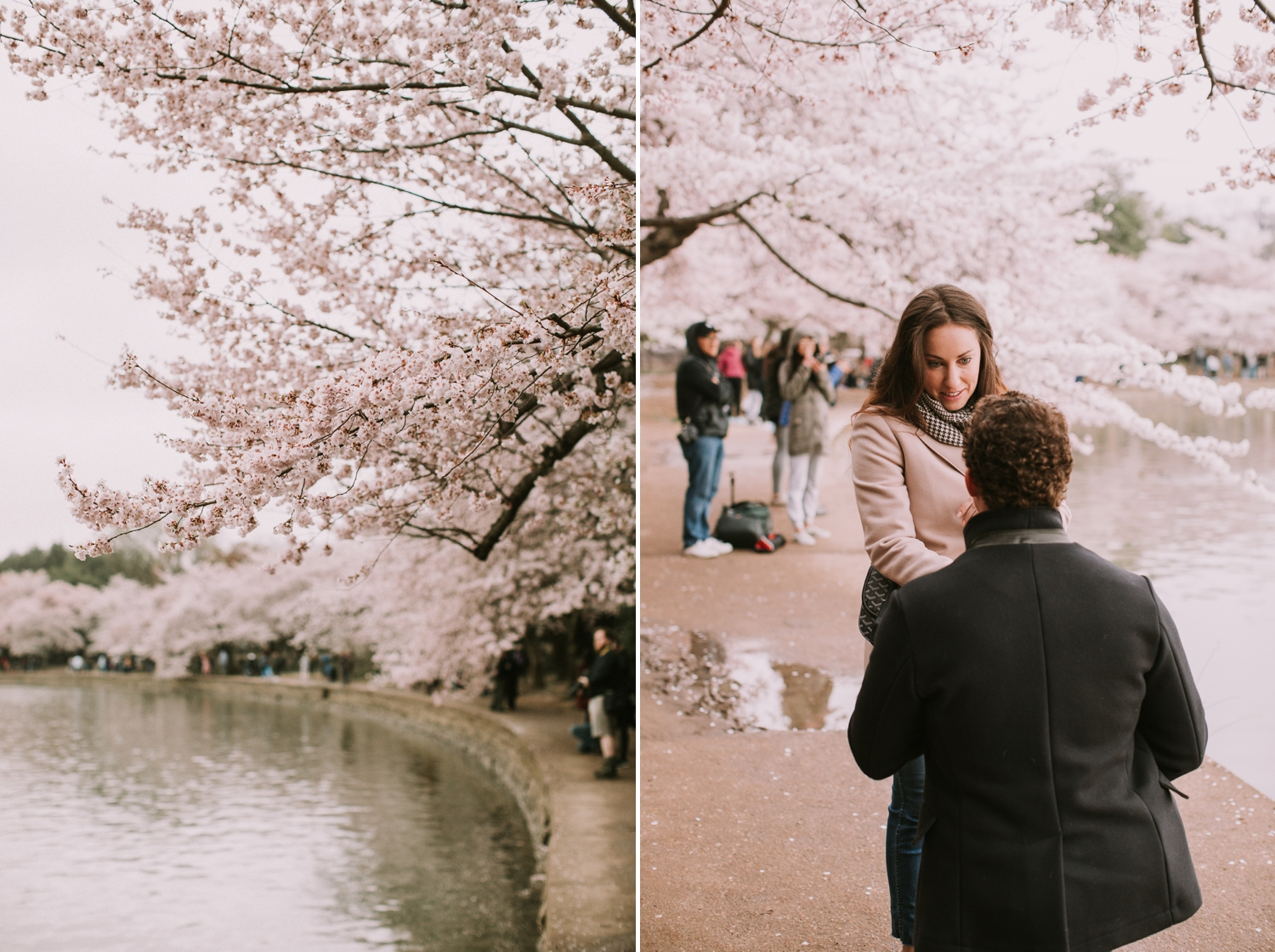 washington-dc-cherry-blossom-tidal-basin-proposal-photographer 2.jpg