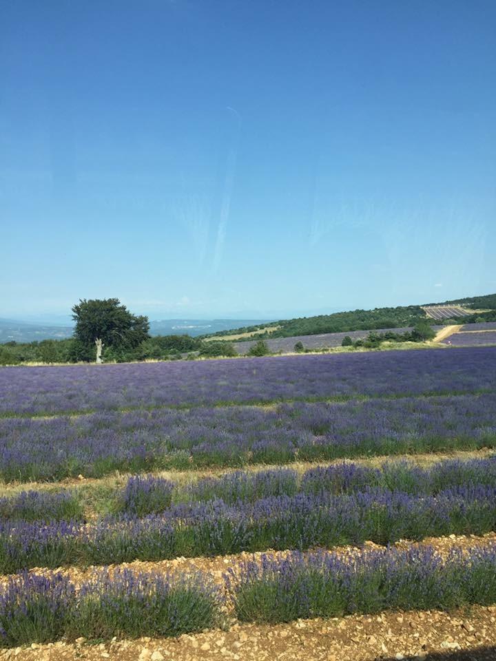 Veron in Provence 11.jpeg