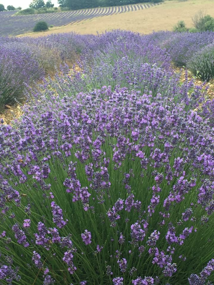 Veron in Provence 14.jpeg