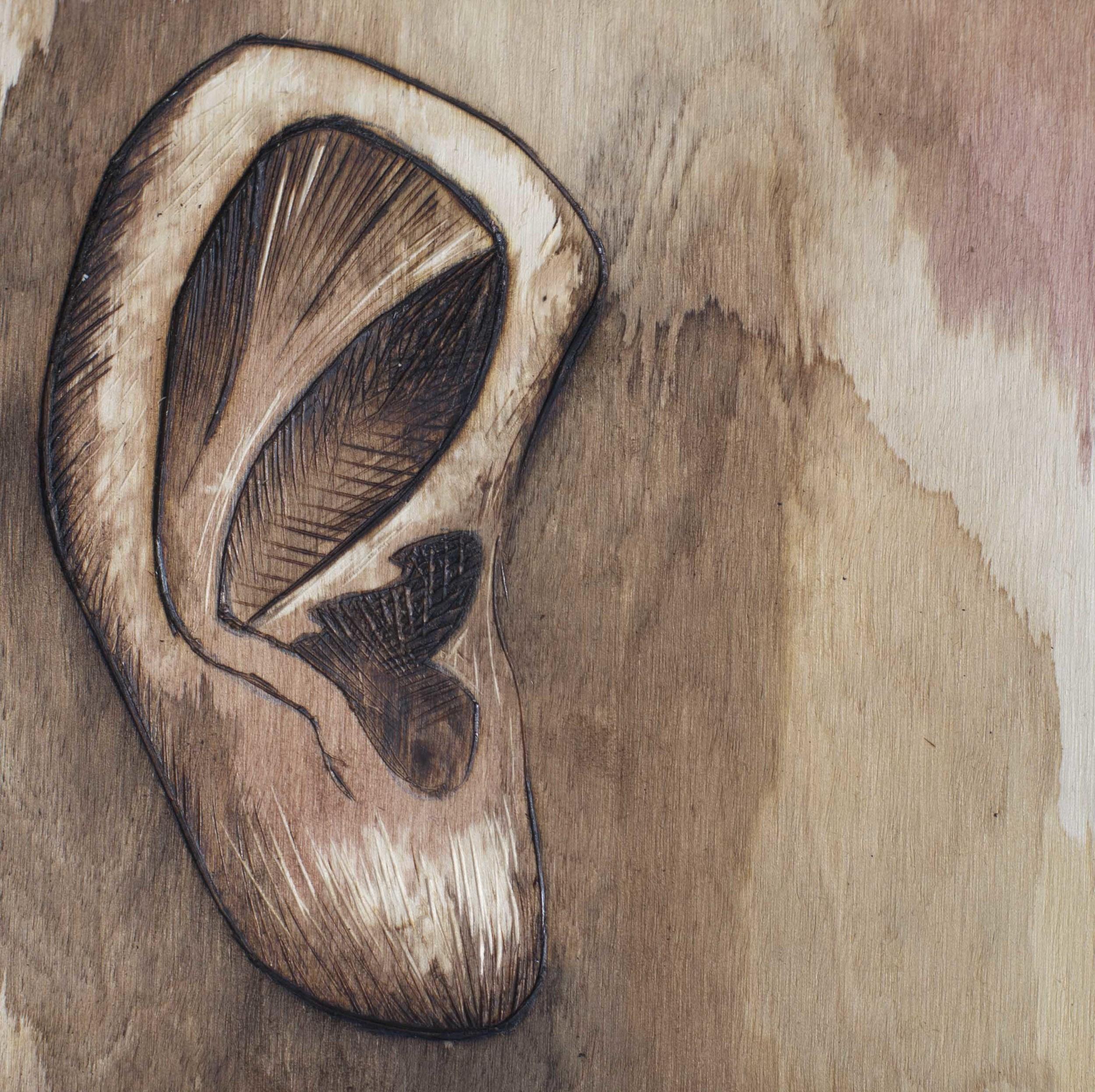 olive's ear.jpg
