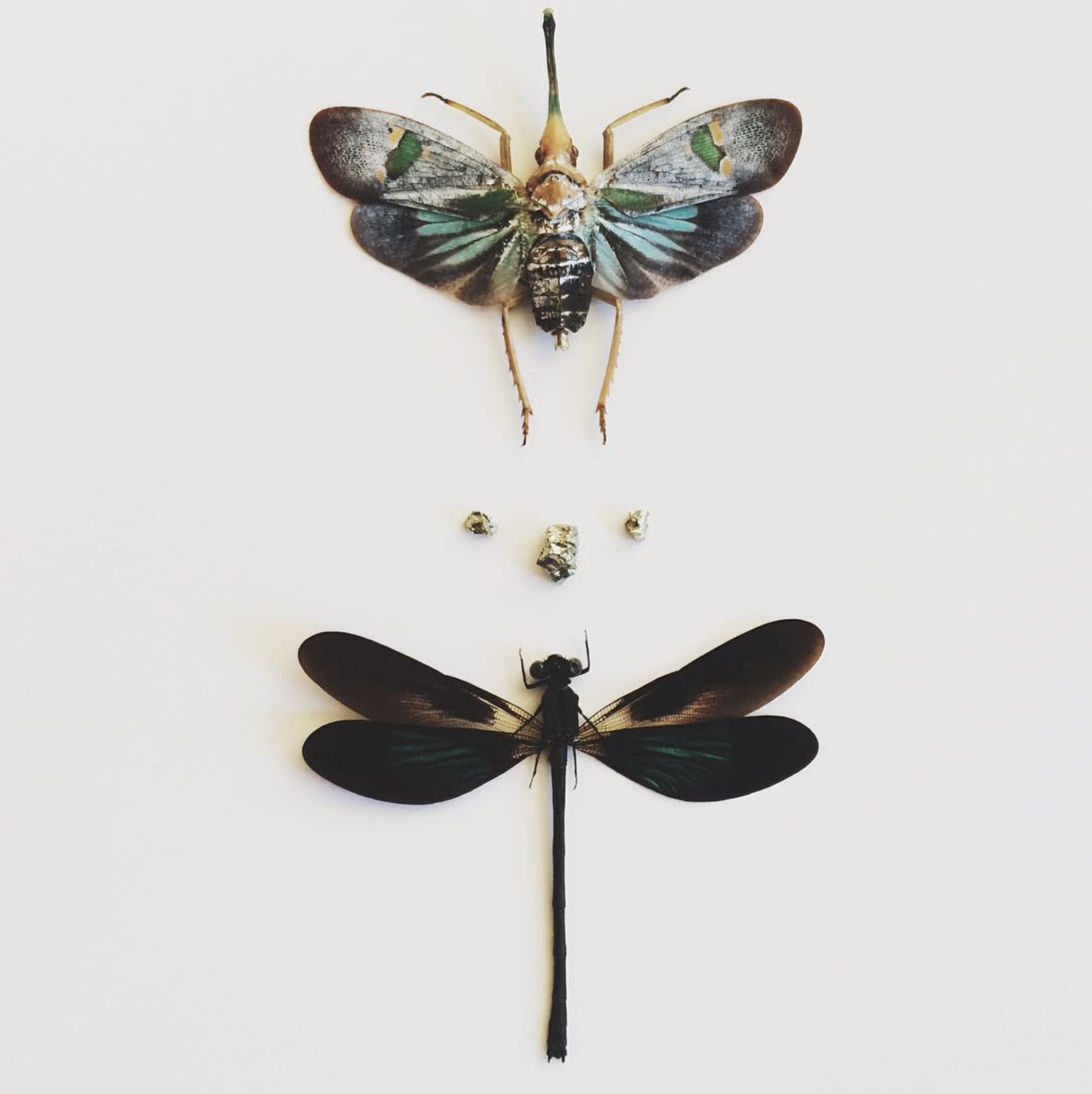 lanternfly.png