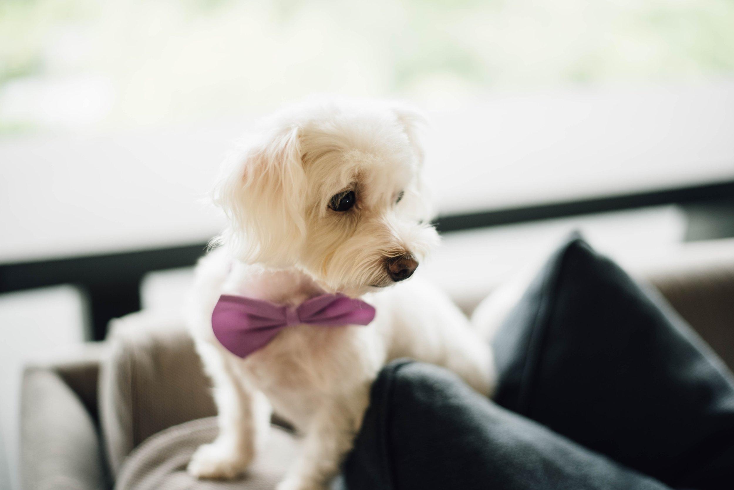 The Hottest Trends in Wedding Entertainment Animals www.redeventweddingfayres.com/blog