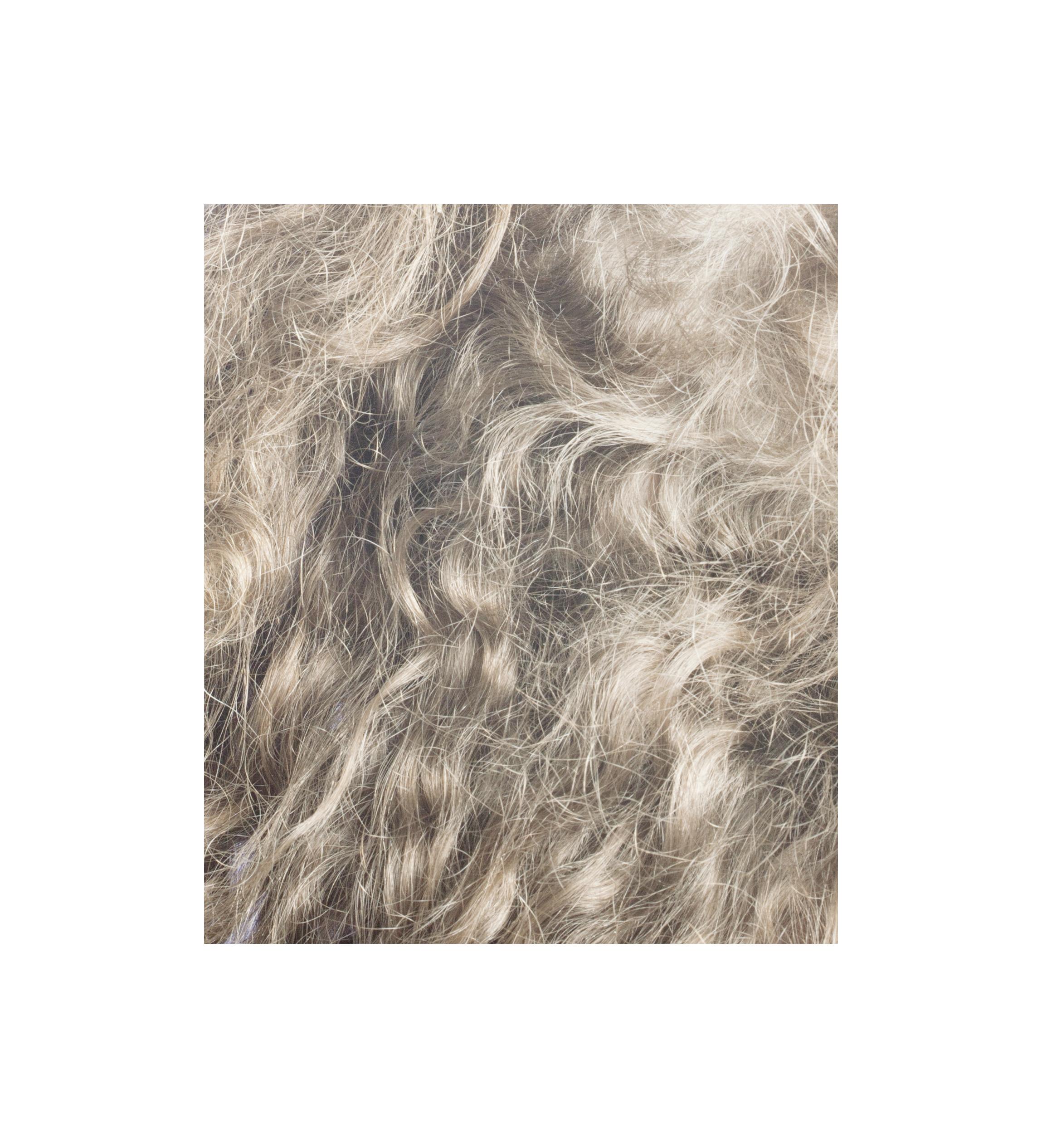 6 Hairs.jpg