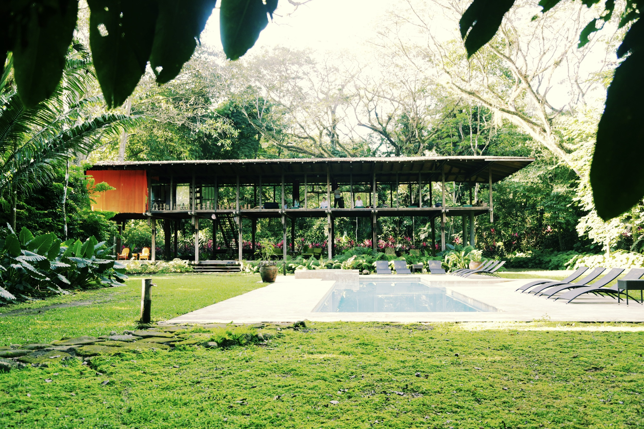 iguana pool.JPG