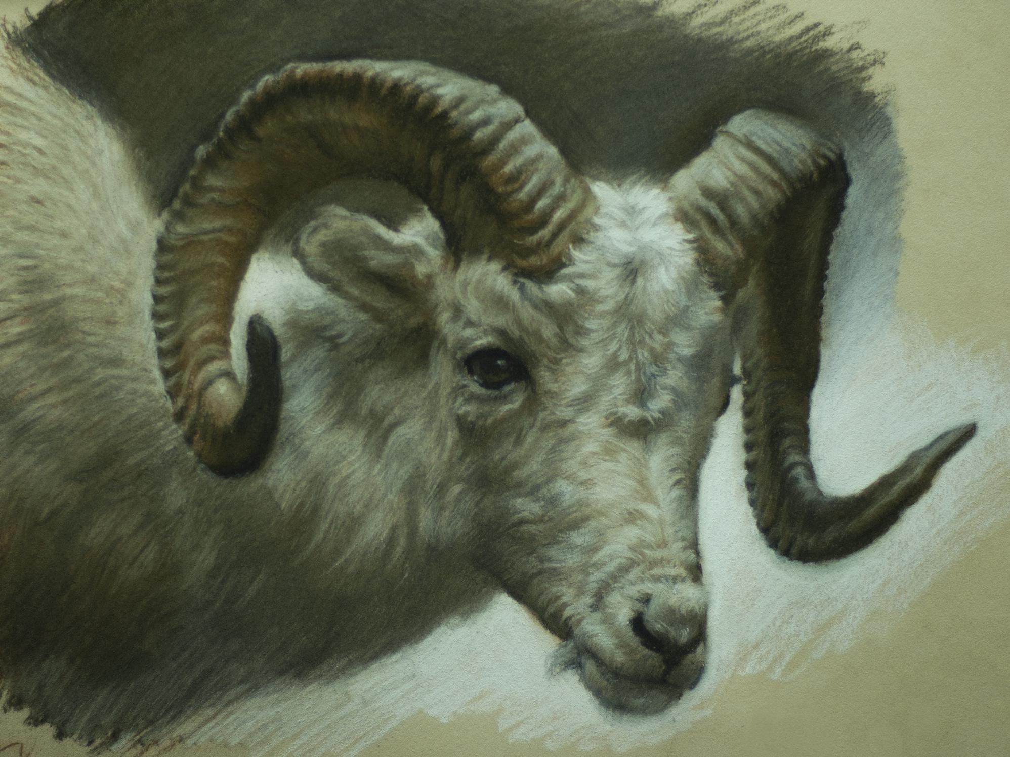 sheeps_head_a_150.jpg