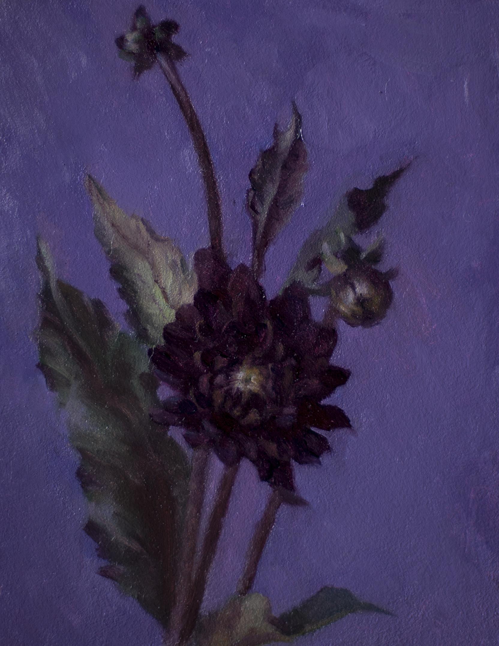 purple dahlia_150.jpg